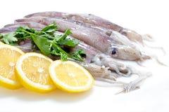 Fresh Calamari with Lemon. Close-up Isloated on White Background Stock Photos