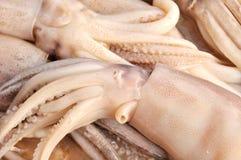 fresh calamary Stock Images