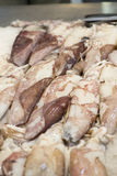 Fresh calamary. Close up image of fresh calamary in the Central Market of Valencia Stock Photos