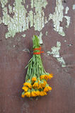 Fresh calendula marigold medical herb flowers bunch on old wall Royalty Free Stock Images