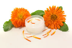 Fresh Calendula Ointment Stock Image