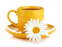 Fresh camomile flowers and camomile herbal tea Stock Photography