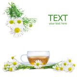 Fresh camomile tea. Fresh camomile flowers and camomile herbal tea isolated on white square background royalty free stock images