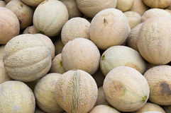 Fresh cantalopes ready for sale at the market Stock Images