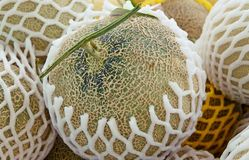 Fresh cantaloupe in the market stock images