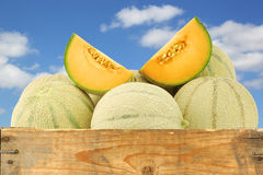 Fresh cantaloupe melons and some cut pieces. In a wooden crate against a blue sky with clouds Stock Photography