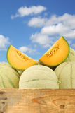 Fresh cantaloupe melons and some cut pieces Royalty Free Stock Photos