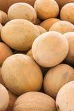 Fresh cantaloupes Stock Image