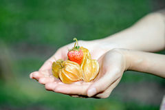 Fresh cape gooseberry Royalty Free Stock Images