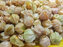 Fresh cape gooseberry fruit. Berries of a Cape gooseberry fresh fruit sour and sweet for backgrounds process in vintage style Stock Photo
