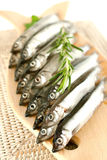 Fresh capelin Royalty Free Stock Photography