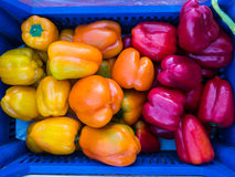 Fresh Capsicums Royalty Free Stock Images