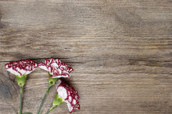 Fresh carnation flowers on wooden background stock image