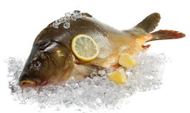 Fresh carp. With lemon on ice stock image