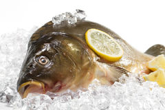 Fresh carp Royalty Free Stock Image