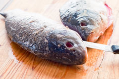 Fresh carp  is cut on the kitchen table Stock Photography