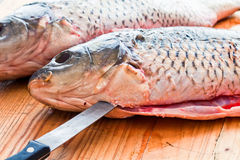 Fresh carp  is cut on the kitchen table Stock Photo