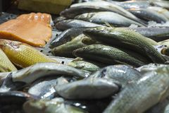 Fresh carp fish at the seafood market, Traditional fish in market. Soft selective focus. Abstract blur foreground and background royalty free stock photo
