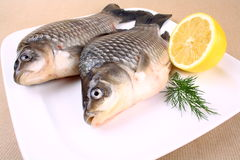 Fresh carp with lemon and dill on white plate Stock Images
