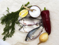 A  fresh carp live fish lying on a on paper background with a knife and slices of lemon and with salt dill. Live fish crucian Cara Royalty Free Stock Image