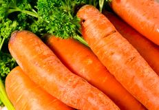 Fresh carrot Stock Image