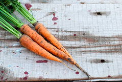 Fresh carrot bunch Stock Photos
