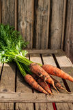 Fresh carrot bunch on grungy wooden background Royalty Free Stock Images