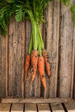 Fresh carrot bunch on grungy wooden background Stock Images