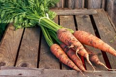 Fresh carrot bunch on grungy wooden background. Healthy food concept Royalty Free Stock Image