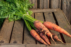 Fresh carrot bunch on  rustic  table. Stock Photography