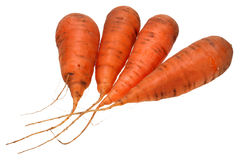 Fresh carrot in closeup  isolated on white with Clipping Path Royalty Free Stock Photo