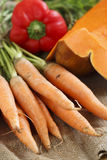 Fresh carrot with green tops Royalty Free Stock Photo