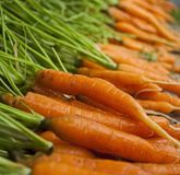 Fresh carrot harvest. Fresh clean carrots with foliage. Closeup stock image