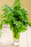 Fresh carrot leaves royalty free stock photo