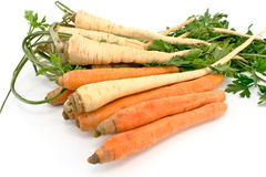 Fresh carrot and parsley with root Royalty Free Stock Image