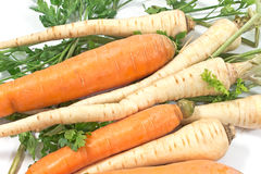 Fresh carrot and parsley with root Stock Photography
