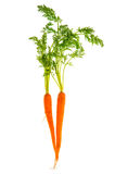 Fresh carrot rotts with green leaves isolated on white Stock Photography