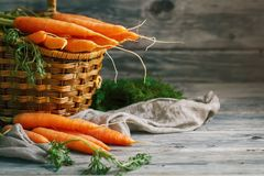 Fresh Carrot on Wooden Table in Garden. Vegetables Vitamins Keratin. Natural Organic Carrot lies on Wooden background. Rustic Style.Harvest. Selective focus Royalty Free Stock Image