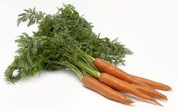 Fresh Carrots. Shot in studio on white background Stock Images