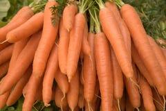 Fresh carrots Royalty Free Stock Image