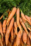 Fresh carrots Royalty Free Stock Photos