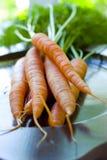 Fresh Carrots Stock Photos