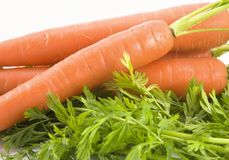 Free Fresh Carrots Stock Photography - 4096492