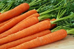 Free Fresh Carrots Stock Photography - 9544482