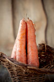 Fresh carrots in a basket. Royalty Free Stock Photo