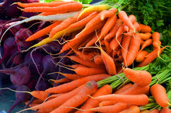 Bunches of Carrots and Beets Stock Photos