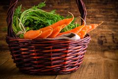 Fresh carrots bunch in basket Stock Photos