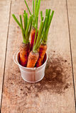 Fresh carrots bunch in white bucket Royalty Free Stock Photo