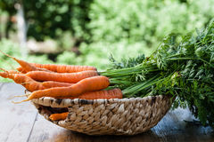 Fresh carrots bunch Stock Photography