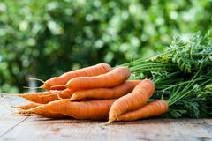 Fresh carrots bunch Stock Image